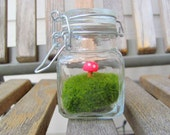 Moss Spotted Mushroom Terrarium Miniature Fairy  Garden in a Glass Jar