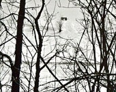 Western Wagon, Snow, Trees Branches in Winter Wonderland Woodland Landscape Photograph - Black and White Fine Art 35mm Photo Wall Hanging