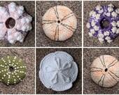 Sea Urchin - crochet pattern