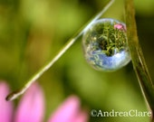 Flower Reflection Whimsical Nature Trickle Drop 8x10 Fine Art Photograph, Pink