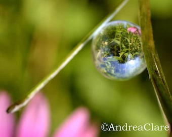 Flower, Reflection, Whimsical, Nature, Trickle Drop, 8x10 Fine Art Photograph, photo, print, garden, green, marble, surreal, shabby chic