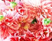 Flower Photography, Mothers Day, Romantic, Feminine, Coral, Peach, Salmon pink, Summer Dahlia-Swirl
