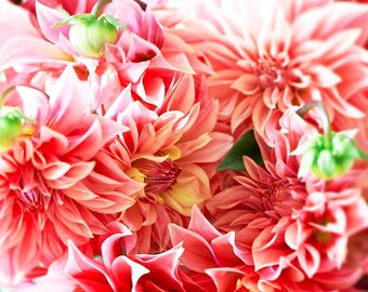 Flower Photography, Mothers Day, Romantic, Feminine, Coral, Peach, Salmon pink, Summer Dahlia-Swirl