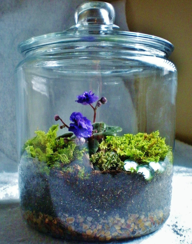 Blue Violet amp Moss Terrarium Living Art Amethyst Green Gems