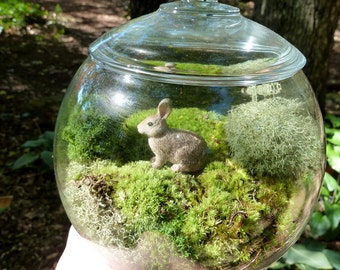 Small Covered Vase Terrarium, Glass, Bunny, Lichen and Moss.  Great for HOME or OFFICE. Nice Unusual Gift. Terrariums by mossterrariums on E