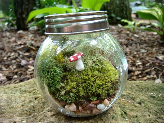 CARMIE Jar, Glass, Mushroom, Lichen and Moss Terrarium. Great for HOME or OFFICE. Nice Unusual Gift. Terrariums by mossterrariums on Etsy.
