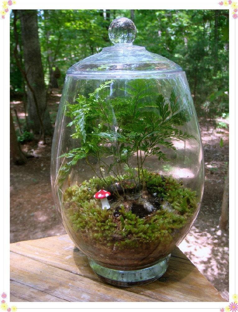 fern terrarium no 8 rabbits foot fern. Black Bedroom Furniture Sets. Home Design Ideas