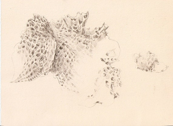 Sea Sponge Original Graphite Pencil Drawing By