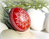 Seen on the Martha Stewart Show Christmas or Eclectic Flower Poinsettia  Etched Egg - Lithuanian Scratched Real Pysanky - Red White