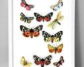 Gorgeous Butterflies (Red) - A3 fine art paper print