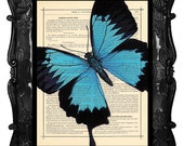 Upcycled Dictionary Page Upcycled Book Art Upcycled Art Print Upcycled Book Print Vintage Art Print Blue Butterfly Blue Beauty