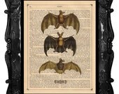 FREE SHIPPING WORLDWIDE LES BATTES THE BATS PRINT on an Antique 1890 Book Page