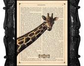 Giraffe Art Print Antique Book Page Art Print Vintage Dictionary Art Print Animals Art Print