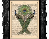 Peacocks with feathers art print on antique book page PEACOCK art print dictionary art PEACOCK Print