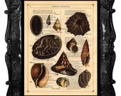 COLOR SHELLS COLLAGE Vintage Art Print Antique Seashells Art Print Book Page Shell Dictionary Page