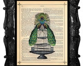PEACOCK bird illustration Peacocks on Bird Cage artistically upcycled dictionary page book art print peacock feathers