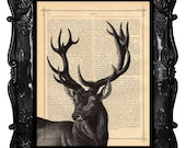 Black Stag Art print - stag art - deer art print on music page antique book page stag dictionary print
