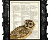 Beautiful fall colored Owl art print on antique book page or music page owl dictionary art print