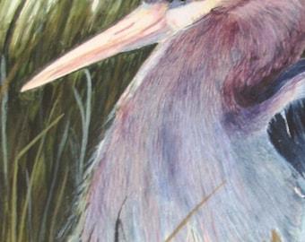 Blue Heron Bird Wildlife Print Signed Limited Edition