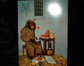 Vintage Chimpanzee Postcard 714.