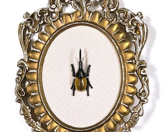 Hercules Beetle in Victorian Frame - 3D Wall Art Decor 7.5x11in