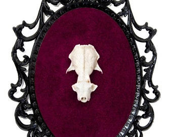 Real Mink Skull on Red Velvet - Victorian Framed Object - Wall Art Decor 7x10in