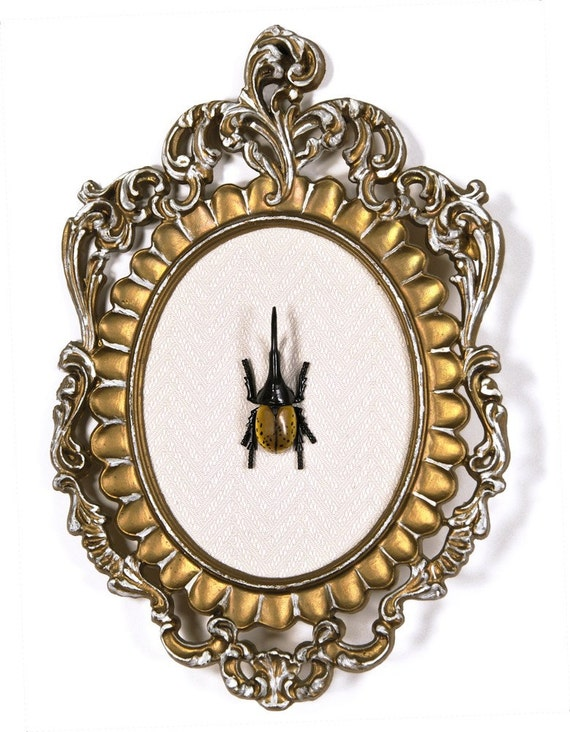 Hercules beetle in victorian frame 3d wall art decor for Victorian wall decor