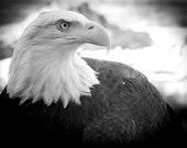Bald eagle wall art, Black and White Photography, Animal art print, Natire photography,  Eagle art, Nature wall art, Wildlife photography