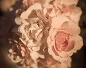 Nursery decor soft baby pink rose photograph -  Original signed 8 x 10 color photo of delicate pink roses