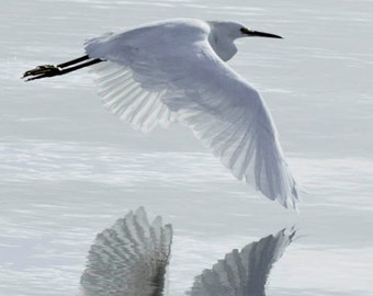 Winter Crane White on White photograph of Snowy Egret in flight over water  -  Original signed 8 x 10  photo by Tania Cardenas