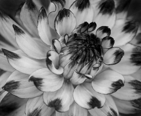 Black and white art, Nature wall art, Fine art photography, Flower Decor, Dahlia art, Botanical print, Art print, Black and white dahlia