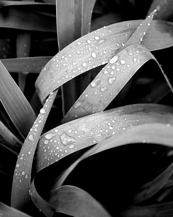 Nature wall art, Botanical print, Fine art photography, Black and white art, Nature wall decor, Art Print, Nature photography,