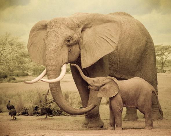 Mother And Child Elephant Nursery Decor Natural History Art