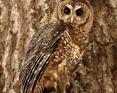 Wild Owls - Photo Greeting cards, set of 3