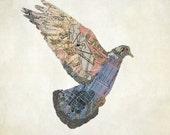 Le Pigeon de Paris