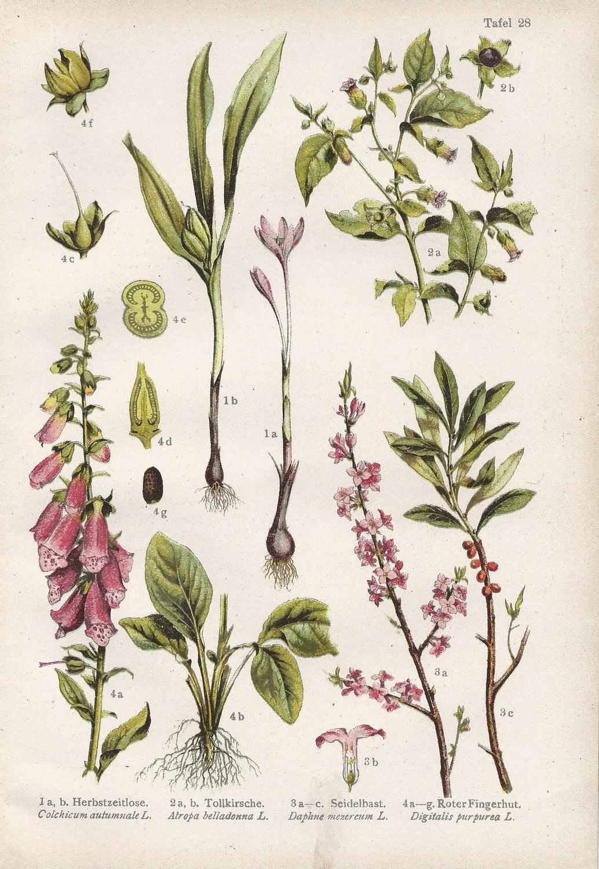 Diagram Of Lavender Flower Diagram Of Hibiscus Flower