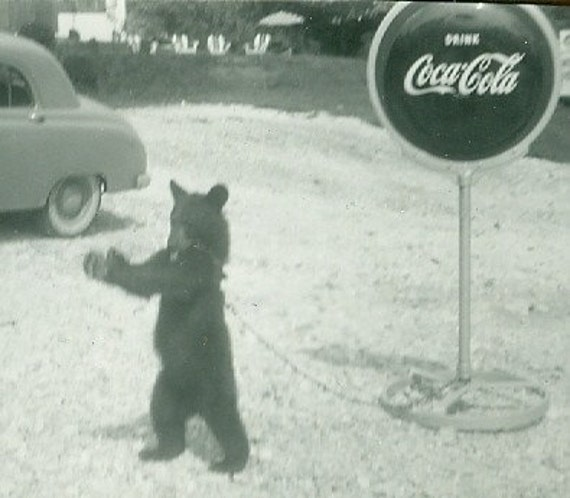 Vintage Photo Lot: Coke Addicted Little Bear, Instant Collection