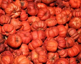 2 lb Orange Putka Pods Mini Pumpkins