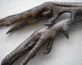 DISCOUNT - Pheasant Feet