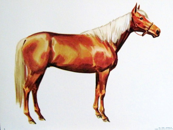 1960s PALOMINO HORSE Illustration Poster  - vintage extra large educational flash card art, ready to frame - Trigger & Mr Ed