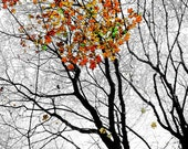 8x12 Fine art Print of Trees In the fall