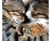 Sweet Cat Print - Cat Love - 5x5