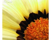 Yellow Flower Print - Small 5x5 Flower Picture