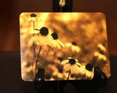 Brown Eyed Susan Post Cards / Notecards in Sepia - set of 5