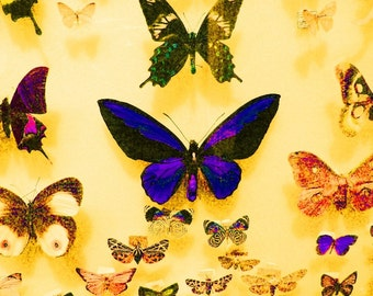 Butterfly Effect -- 8x10 Original Signed Fine Art Photograph