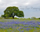 Lone Tree- 8x12 Fine Art Photograph