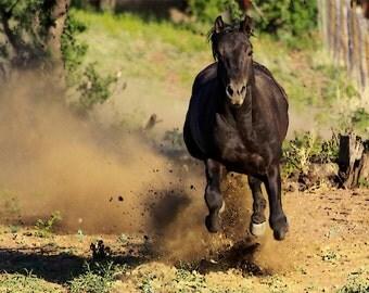 Photograph of Smoke a Spanish Barb Stallion fine art photo