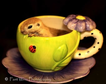 photograph of a baby round tail squirrel.in a lime green tea cup