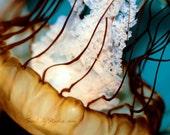 Medusa : jellyfish photography jelly fish beach umbrella aquatic marine life sea nettle ocean home decor 8x10 11x14 16x20 20x24 24x30