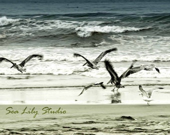 Winter Birds : beach photography pelican seagull ocean surf slate blue gray home decor 8x10 11x14 16x20 20x24 24x30